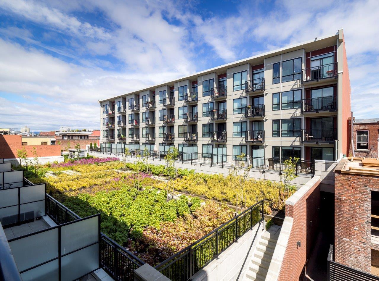 Condo courtyard garden